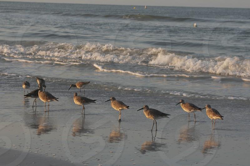 birds on the seashore photo