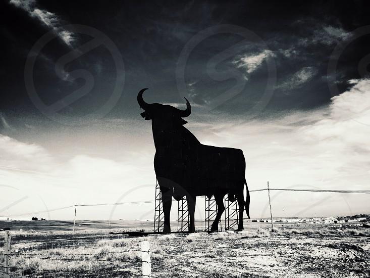 Spain Culture Bull  photo