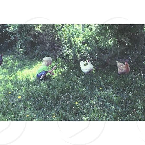 girl in green t shirt near 2 hens photo