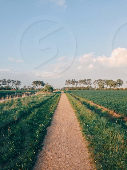 white sandy pathway and green field photo