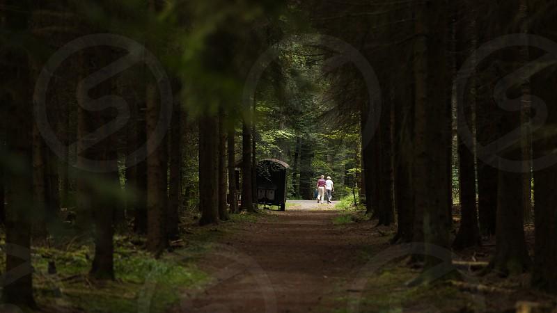 Walking in the forest Germany Echterdingen  photo