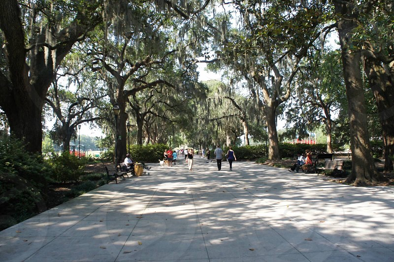 people walking on park along green trees during daytime photo