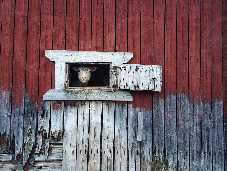 animal on wooden house photo