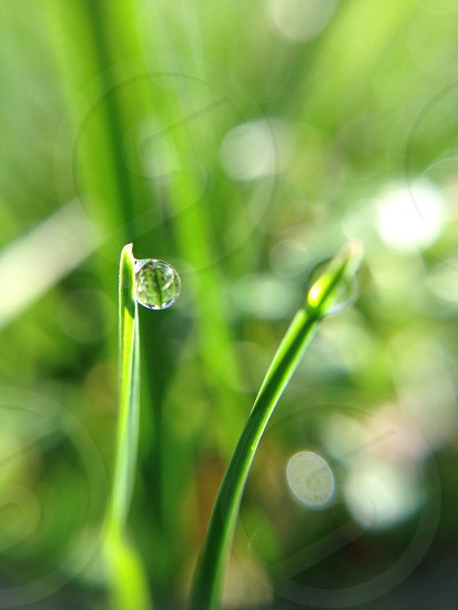 dew on green plant photo