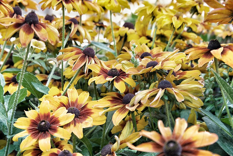 Flowers flower background yellow red  photo