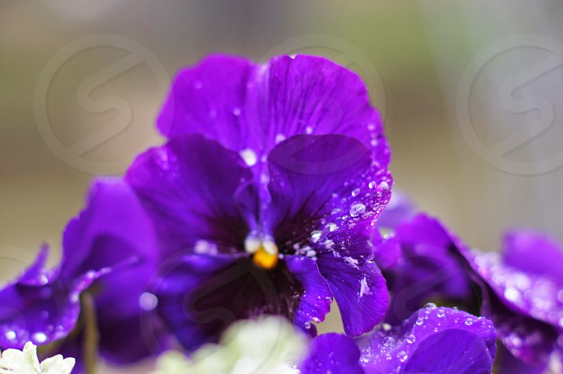 closeup photography of purple petaled flower photo