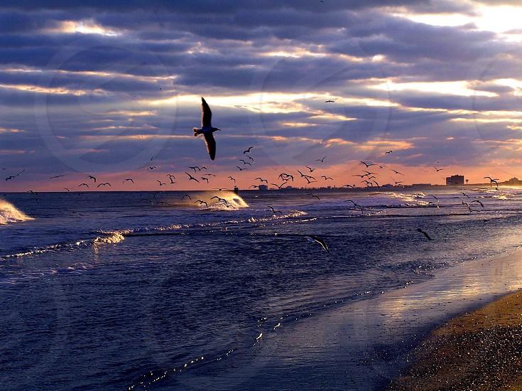 birds flying on sea photo