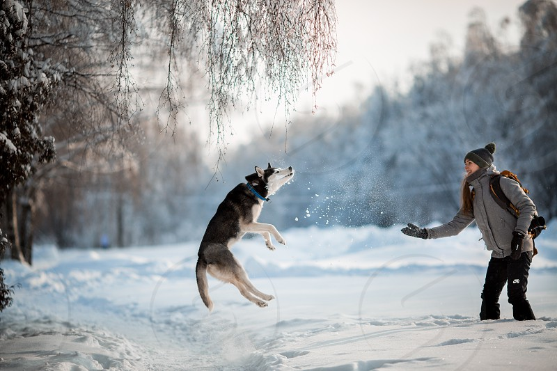 eyes alaskan animal arctic pet dog park forest tree january white wild outdoor portrait blue canine husky malamut mammal animals walking sunny day daylight cold cute fur fun funny perebred bred siberian nature jumping domestic frozen snow snowy winter photo