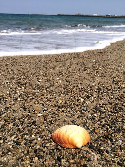 打ち上げられた貝殻(Launched shell) photo