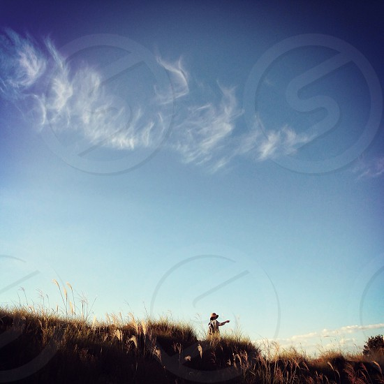 wheat and cirrus cloud photography  photo