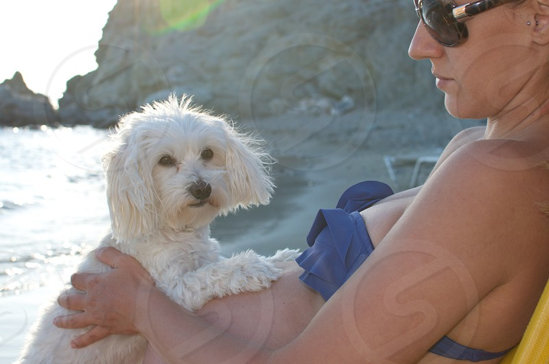 Pregnant woman at the beach holding a maltese dog photo
