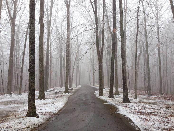 trees beside walkway photo