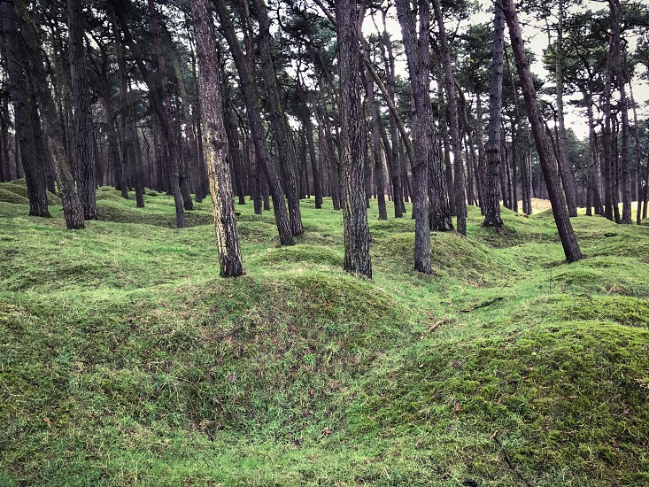 Outdoor day landscape horizontal colour Vimy Ridge France Europe European Battle of Arras Western Front World War One WWI WW1 First World War battleground trees shell holes shell shells weapon weaponry artillery explosion explosives explosions green grass sun shine shining war warfare trench Trenches  photo