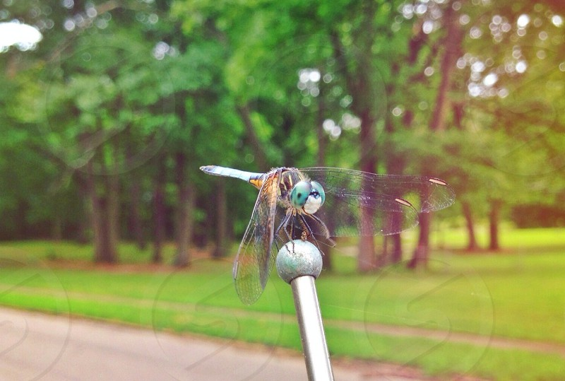 yellow and blue dragonfly perched on stainless steel post on grass field photo