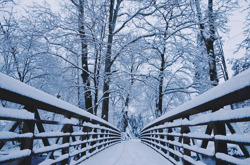 icy bridge ways and forest trees photo