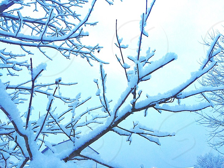Winter; snow; tree; branches; cold; nature photo