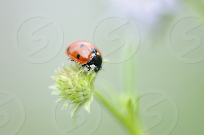 orange ladybug on green flower photo