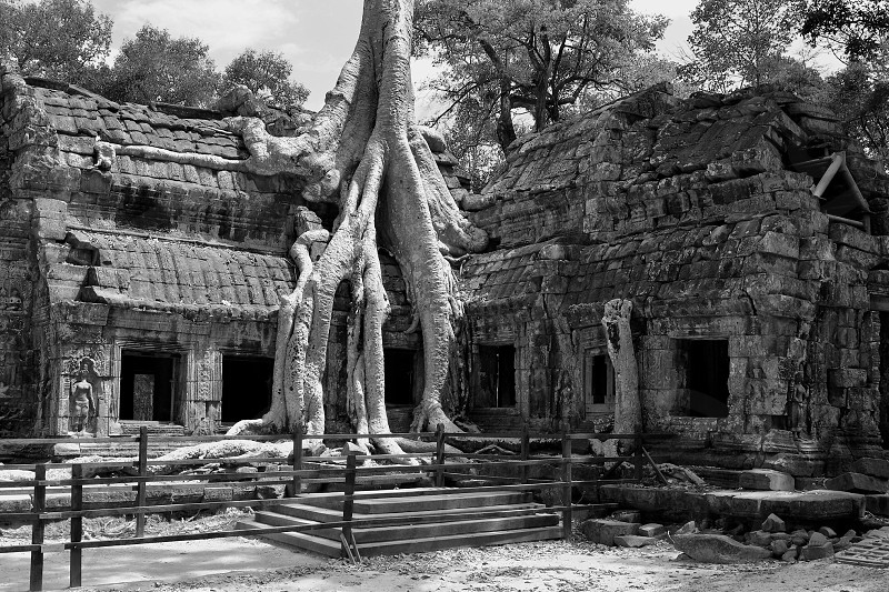 Jungle Temple - Cambodia photo