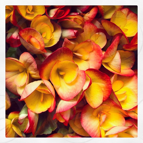 Bouquet of yellow pink peach flowers photo
