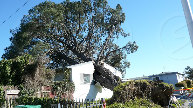 Storm disaster Tree with house in the middle storm damage photo