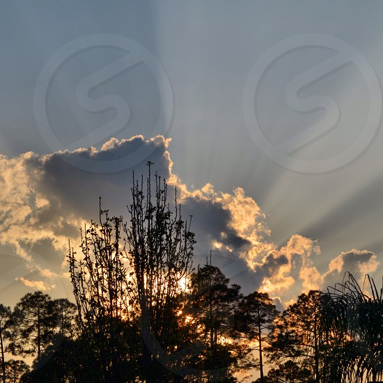Sun setting behind clouds and trees in JacksonvilleFlorida U.S.A. photo