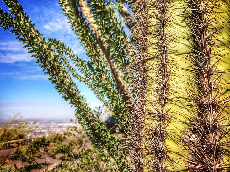 Cactus New Mexico Desert photo