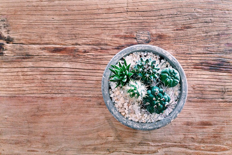 Inside plant idea photo
