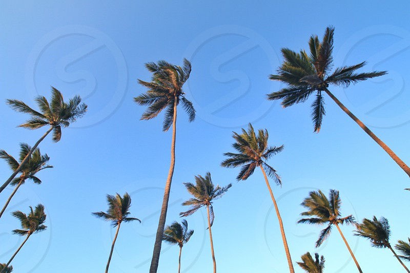 ground view of green palm trees photo
