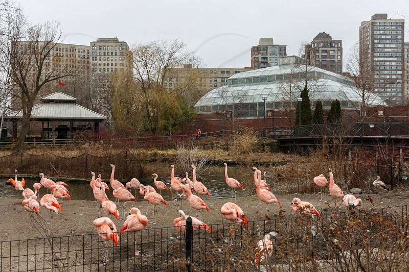 The Lincoln Park Neighborhood is popular because of the Lincoln Park Zoo which is free of charge to all visitors. photo