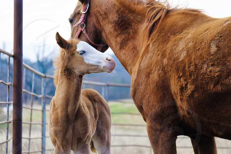 Horse foal on farm with mother. photo
