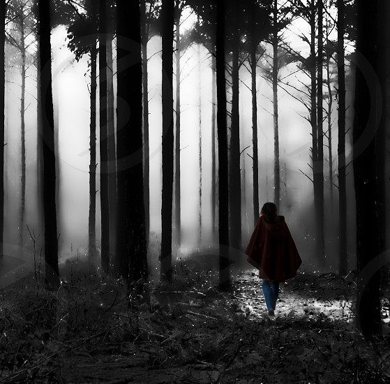 dark woods woods scary walking alone single single person creepy forest fog foggy mist fairy fairy tale eerie cold scared hurry dark darkness trees tree photo