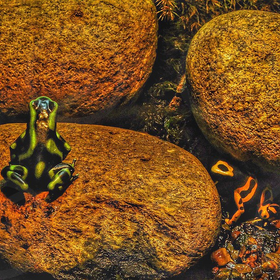 Green orange colors animals nature frogs photo