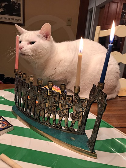 Cat looking at candles on Hanukkah photo