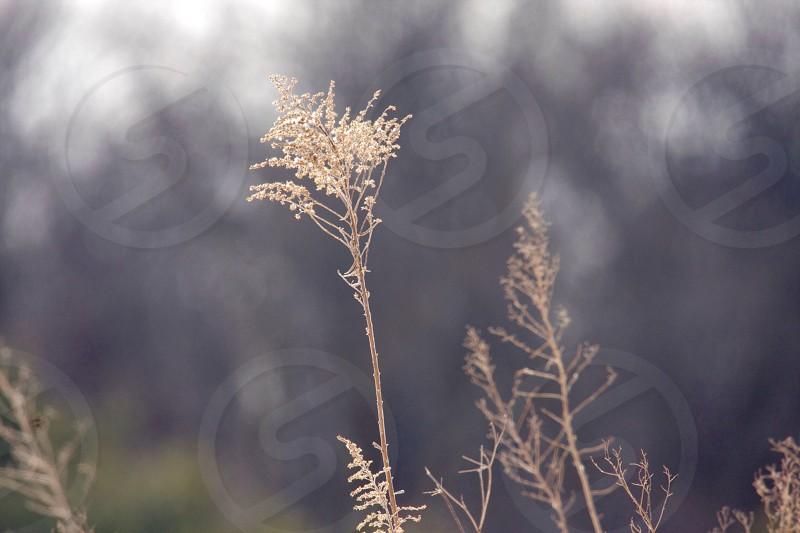 Wild weeds photo