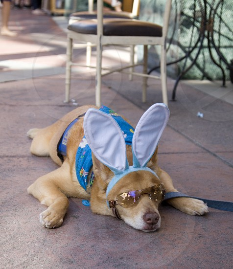 Rabbit Dog photo
