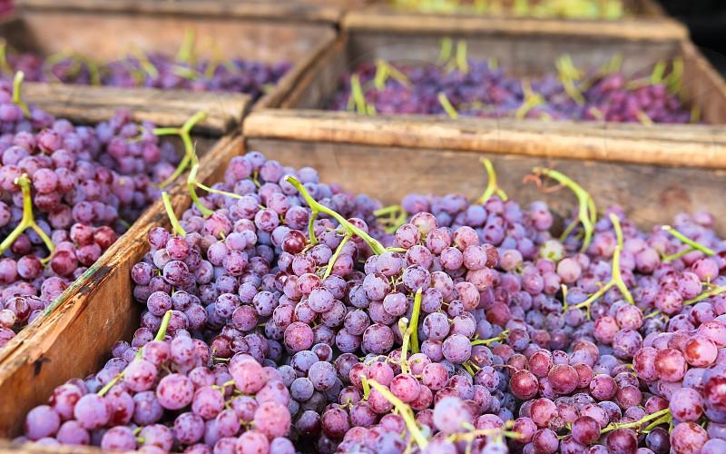 Farmer's market grapes red grapes wine winemaking summer fruit fruit photo