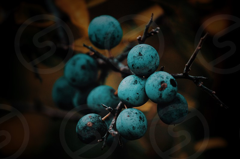 Berry fruits on the forest photo