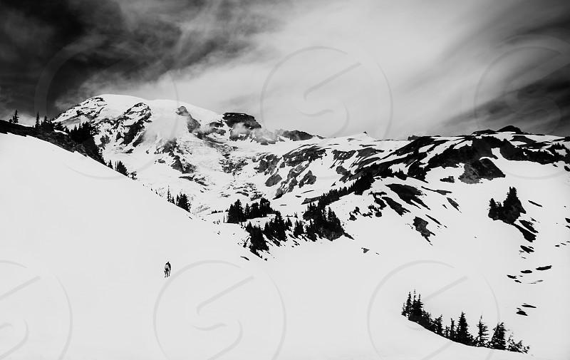 Mt. Rainier Washington. photo