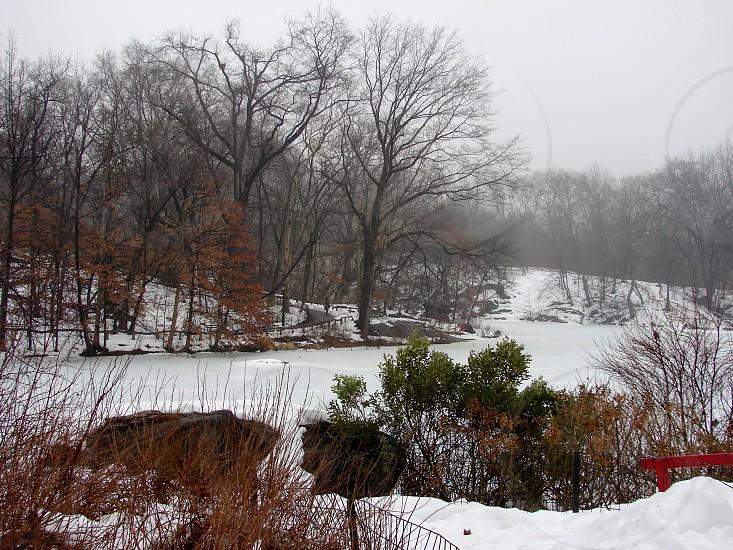Central Park. NYC February 21 2014 photo