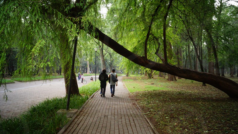Companionship walking together trees path couple calmness walk. photo