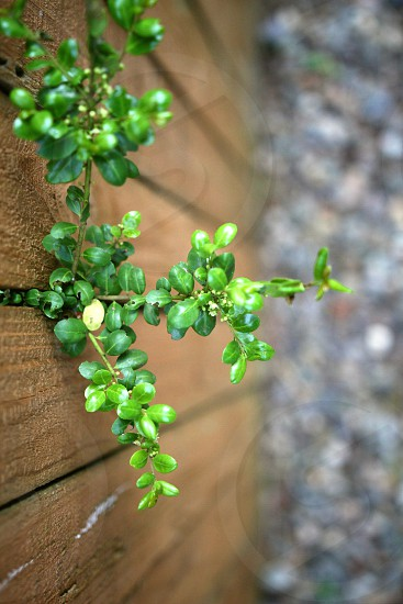 Plant through wooden fence green perspective nature top view photo