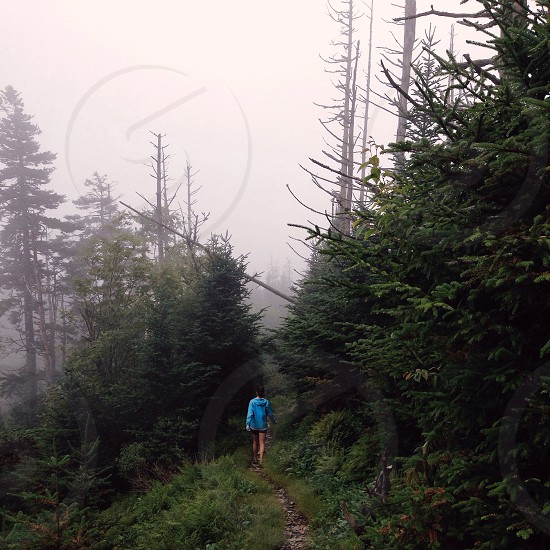 woman in blue hoodie walking on forest photo