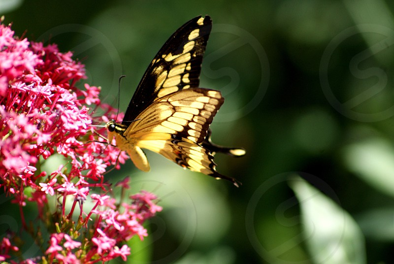 Spring butterfly  photo