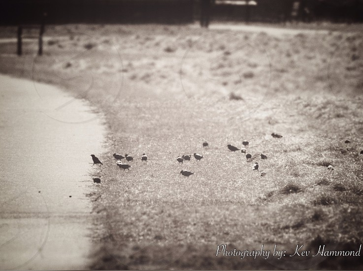 #birds #park. #delaware #life photo