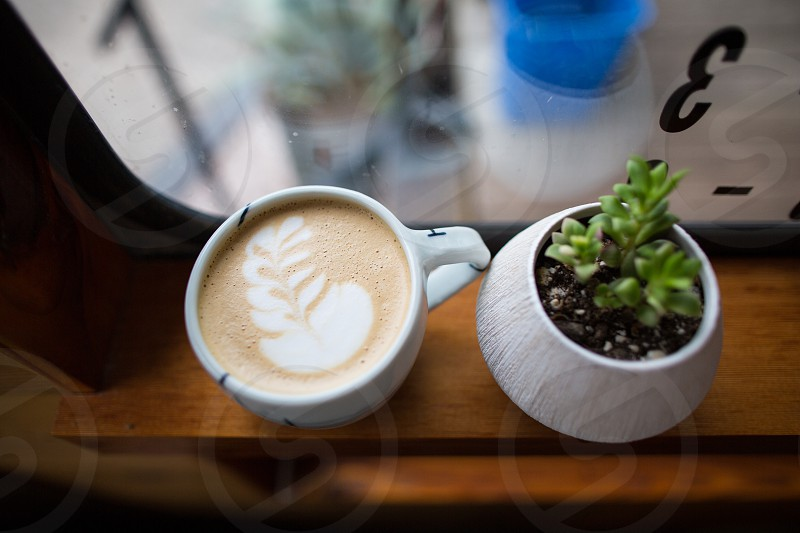 green succulent plant on white vase beside leaf design latte in white ceramic cup on top of brown wooden table photo
