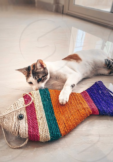 Pets cat playing cat cat toy photo