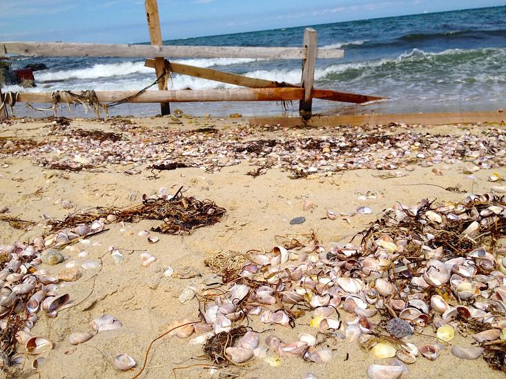 shells on Martha's shore — Martha's Vineyard Cape Cod photo