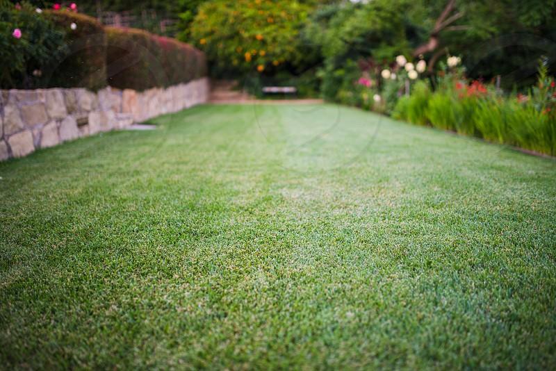 garden lawn grass clean green plants home  photo