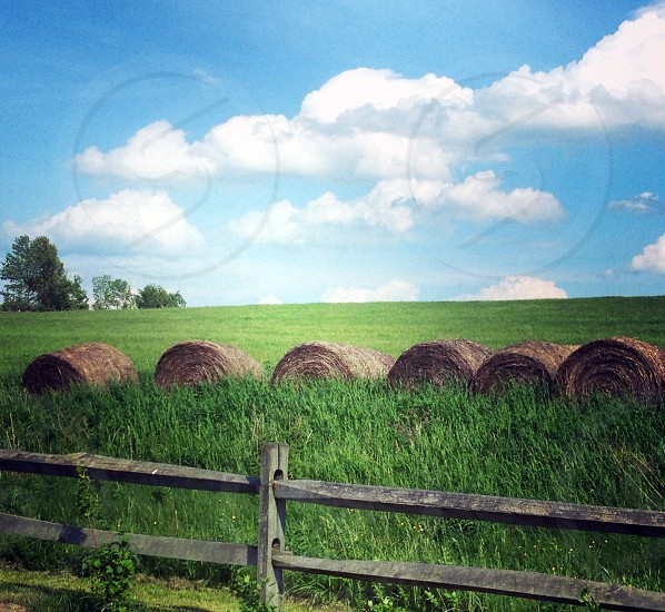 bales of hay seen in upstate NY photo