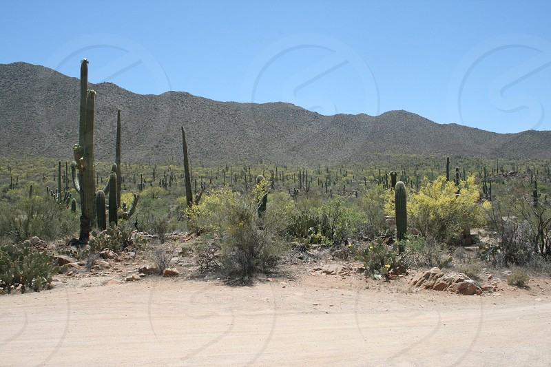 blue sky over dirt road beside field with cactus during daytime photo